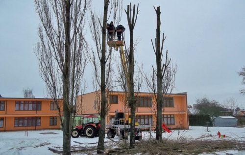 Kácení a ořez stromů