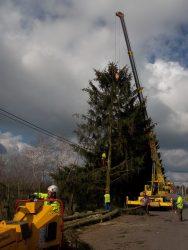 Stavění stromů