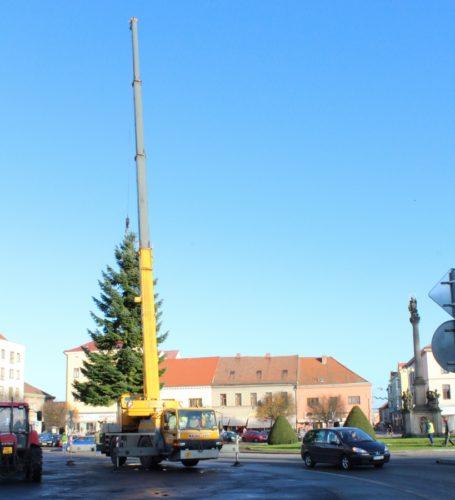 Stavění vánočního stromu